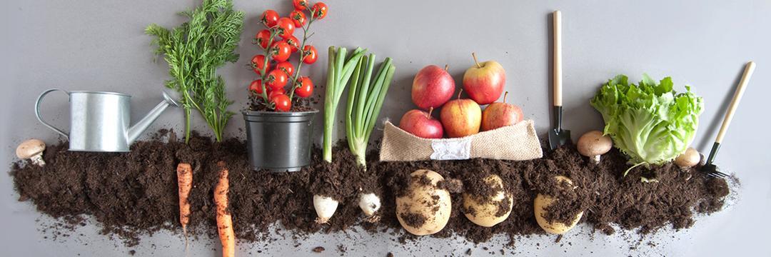 5 motivos para consumir alimentos orgânicos (e como não pagar caro por eles!)